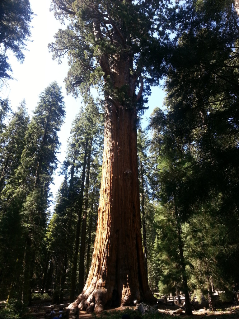 Sequoia and Kings Canyon National Park: General Sherman Tree
