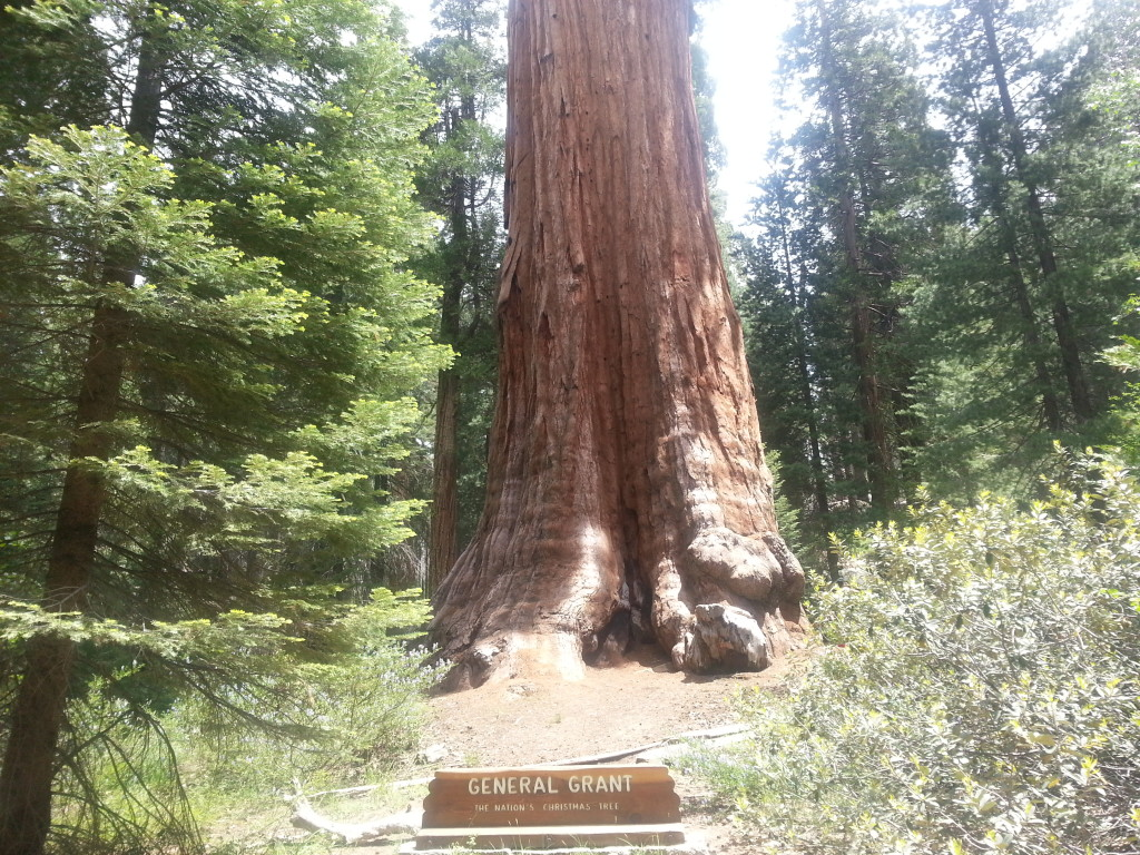 General Grant Tree, Sequoia and Kings Canyon National Park
