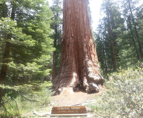 Sequoia and King's Canyon National Park: Points of Interest