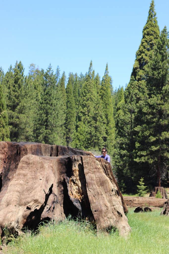 Sequoia and Kings Canyon National Park: Sunken Meadow